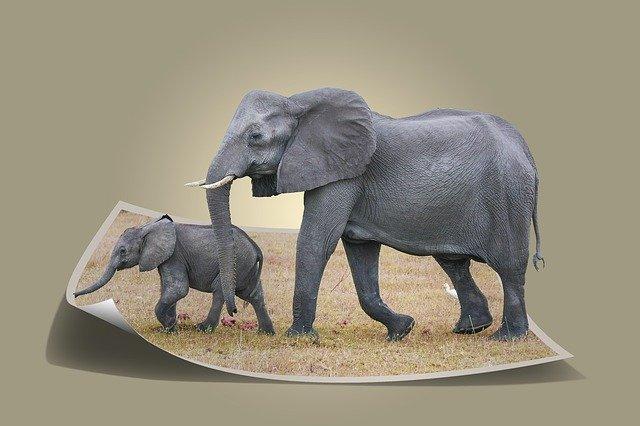 elephant4064398_640